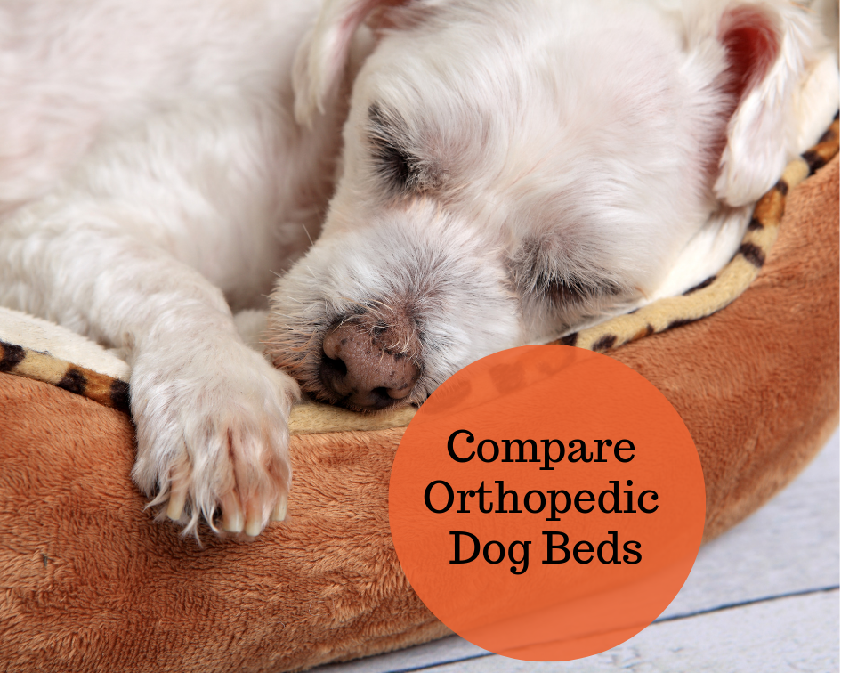 We Compare the Best Orthopedic Dog Beds for Senior Dogs ...